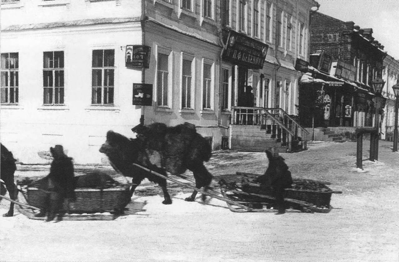 Верблюды в Омске