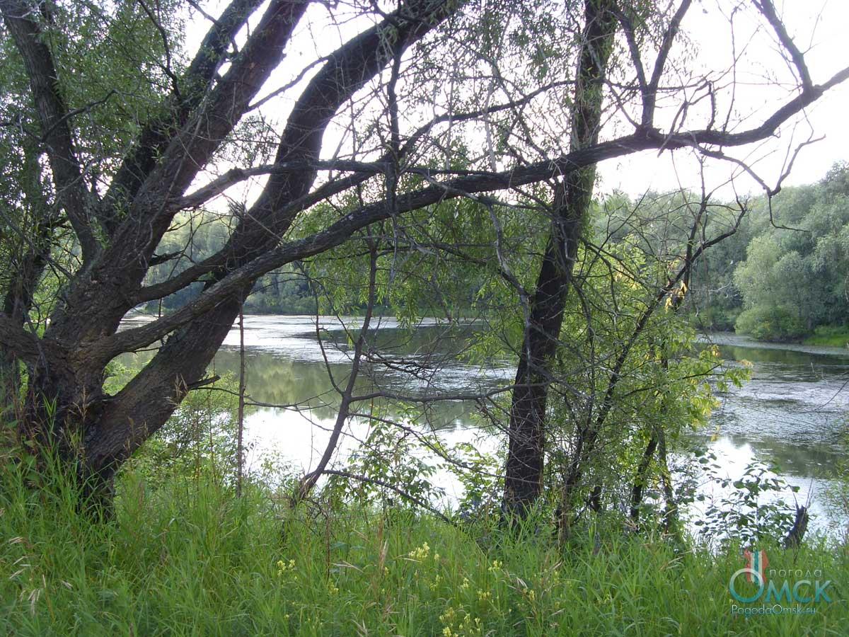 Озеро со всех сторон окружено ивняком