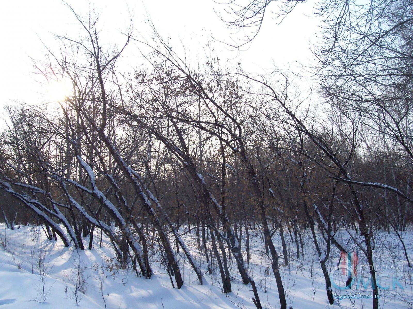 Деревья выгнулись к солнцу