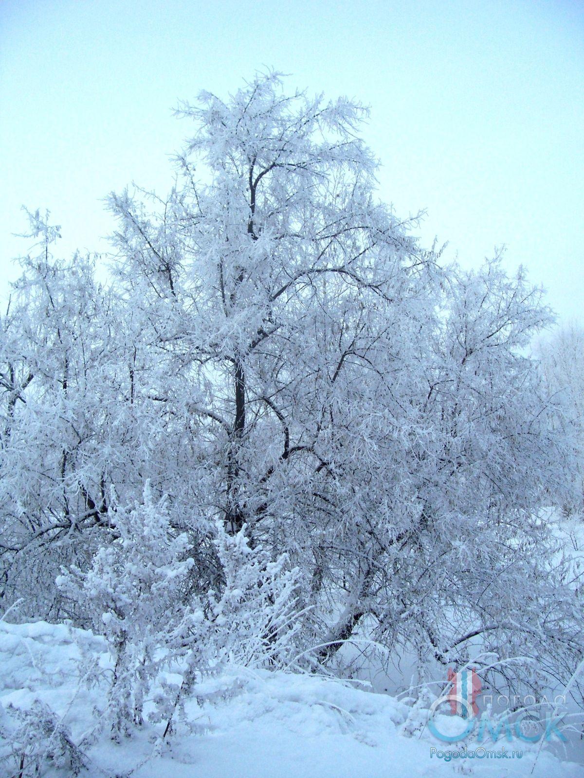 Изморозь на ветках дерева