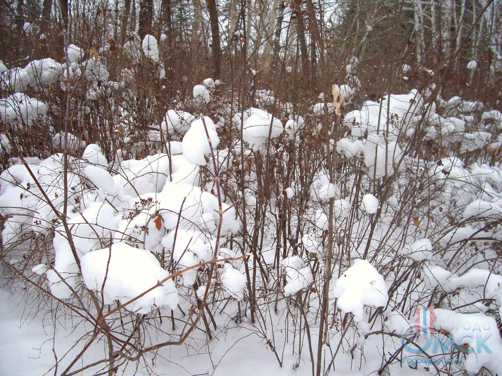 Снег на ветках кустарника