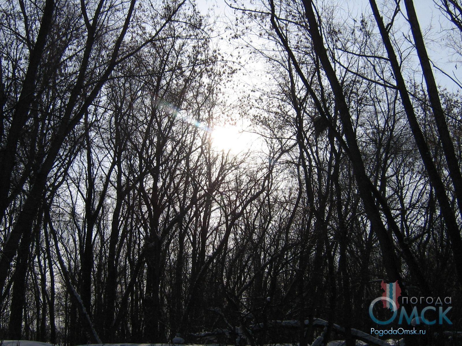 Ветви клена зимой