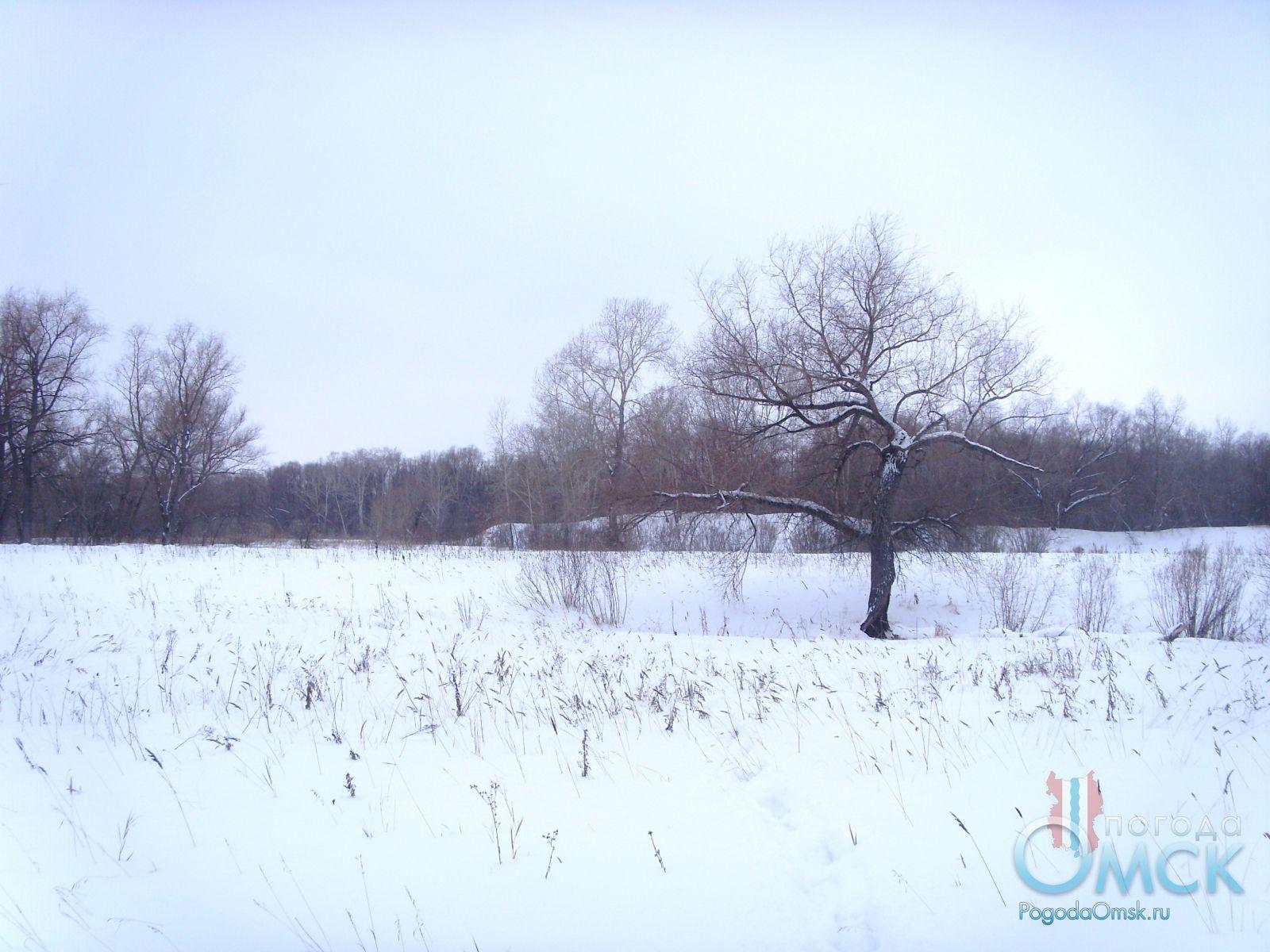 Заснеженная поляна