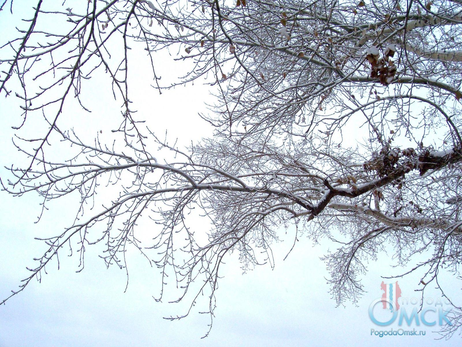 Снег на ветвях дерева