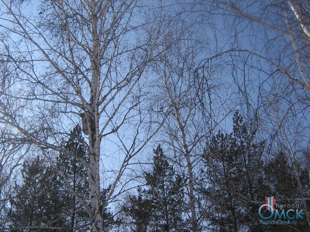 Синее мартовское небо