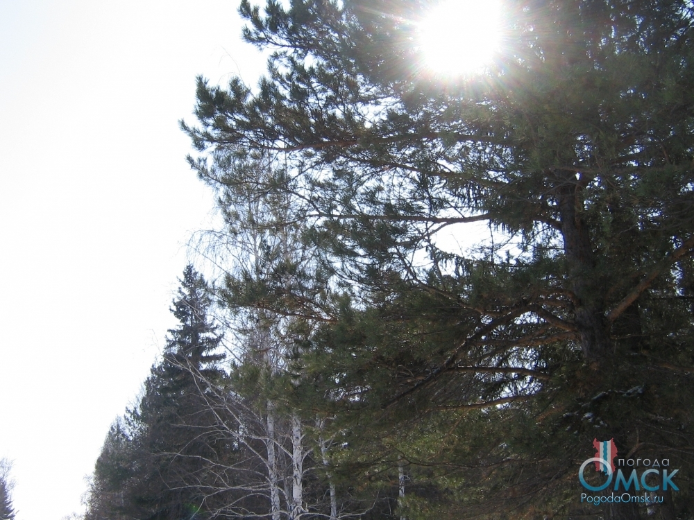 Скоро весна. Пейзажные фотография природы Омского Прииртышья