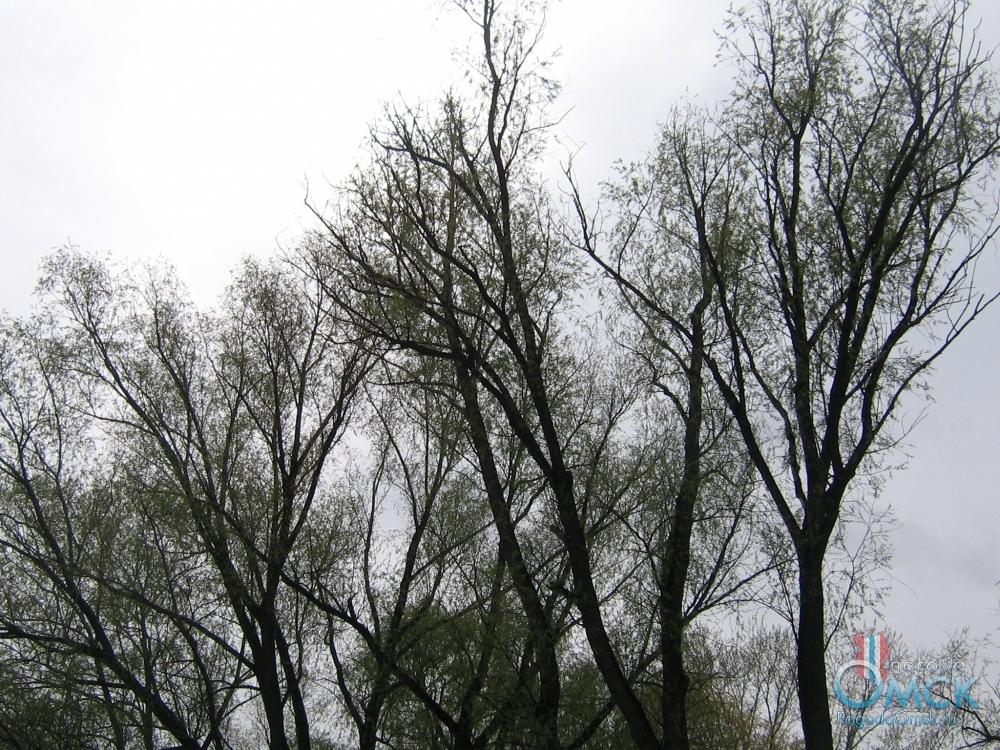 Скоро деревья пышно обрастут листвой