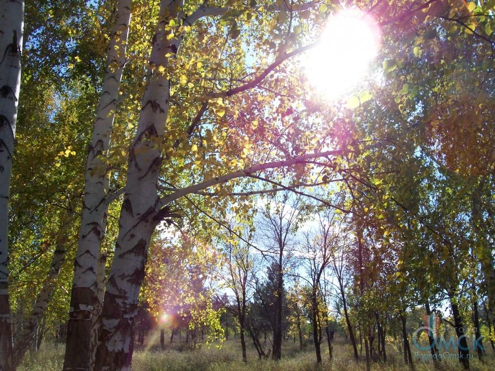 Солнечный свет ослепительно сверкает между листвой
