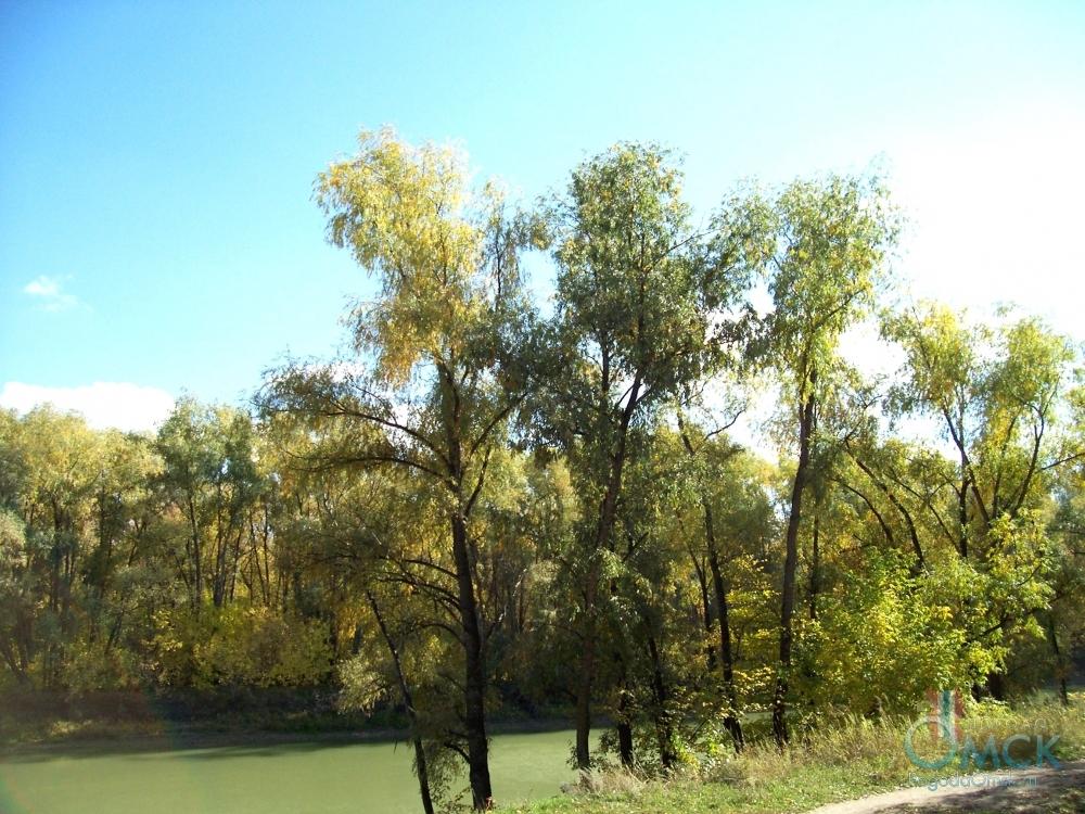 Ивы на берегу реки