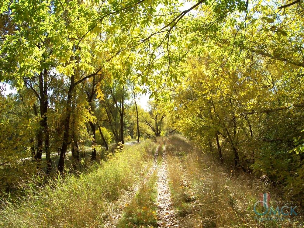 Солнечный свет в листве клена