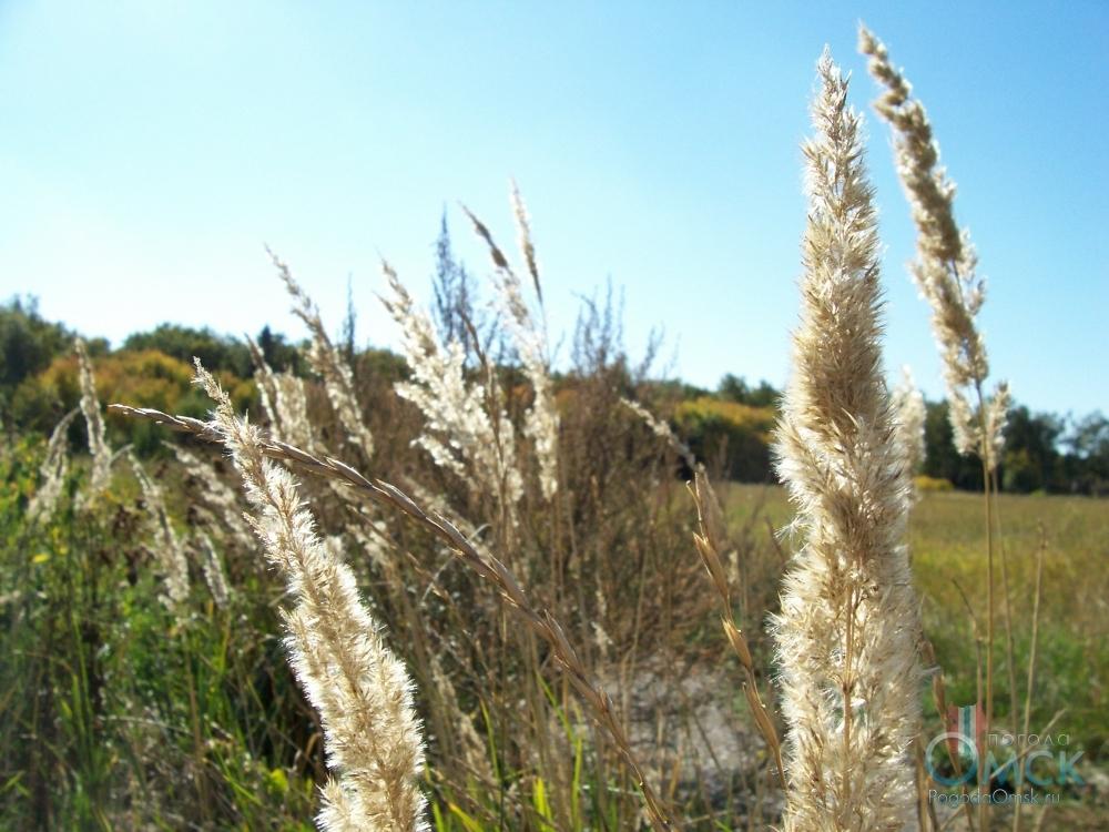 Воздух пропитан терпким ароматом сухой отцветшей травы