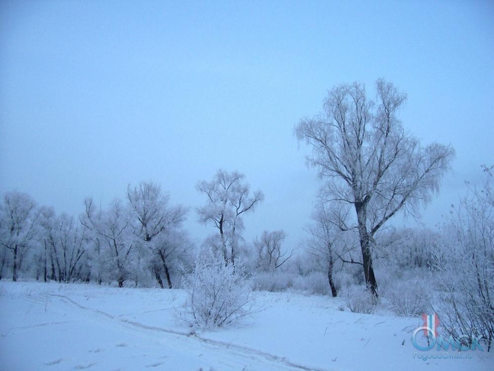 Изморозь на деревьях