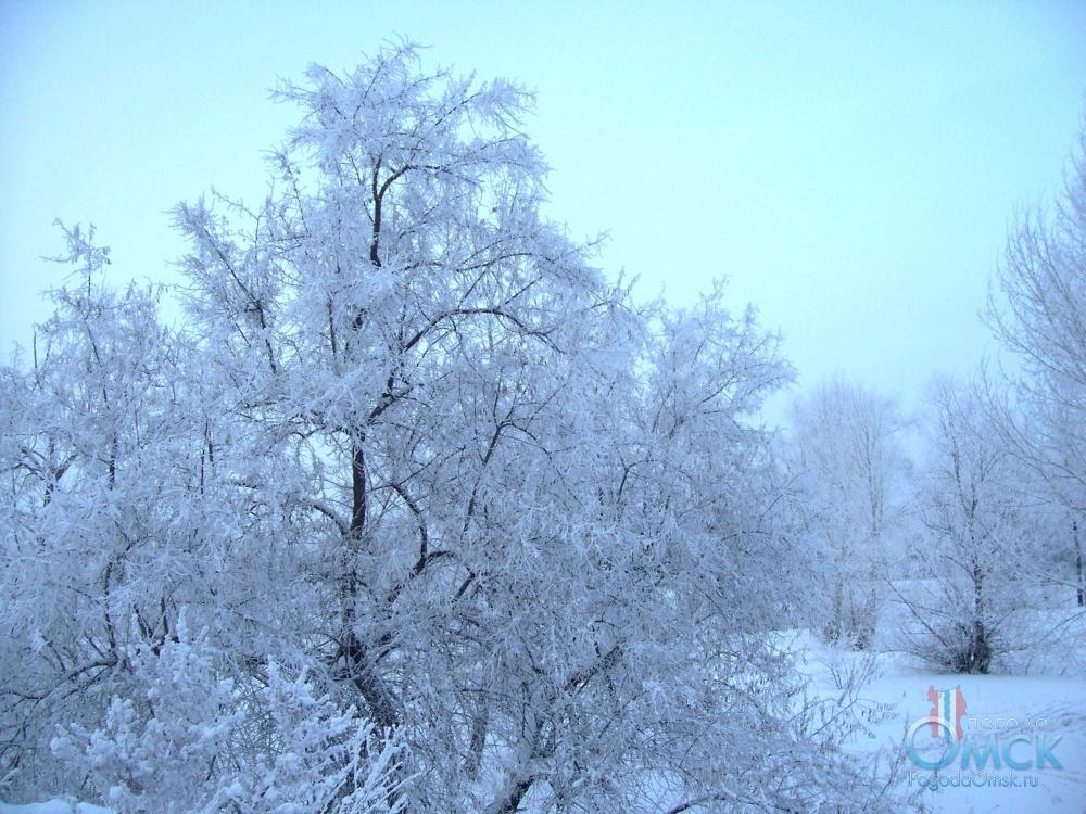 Кроны деревьев в изморози