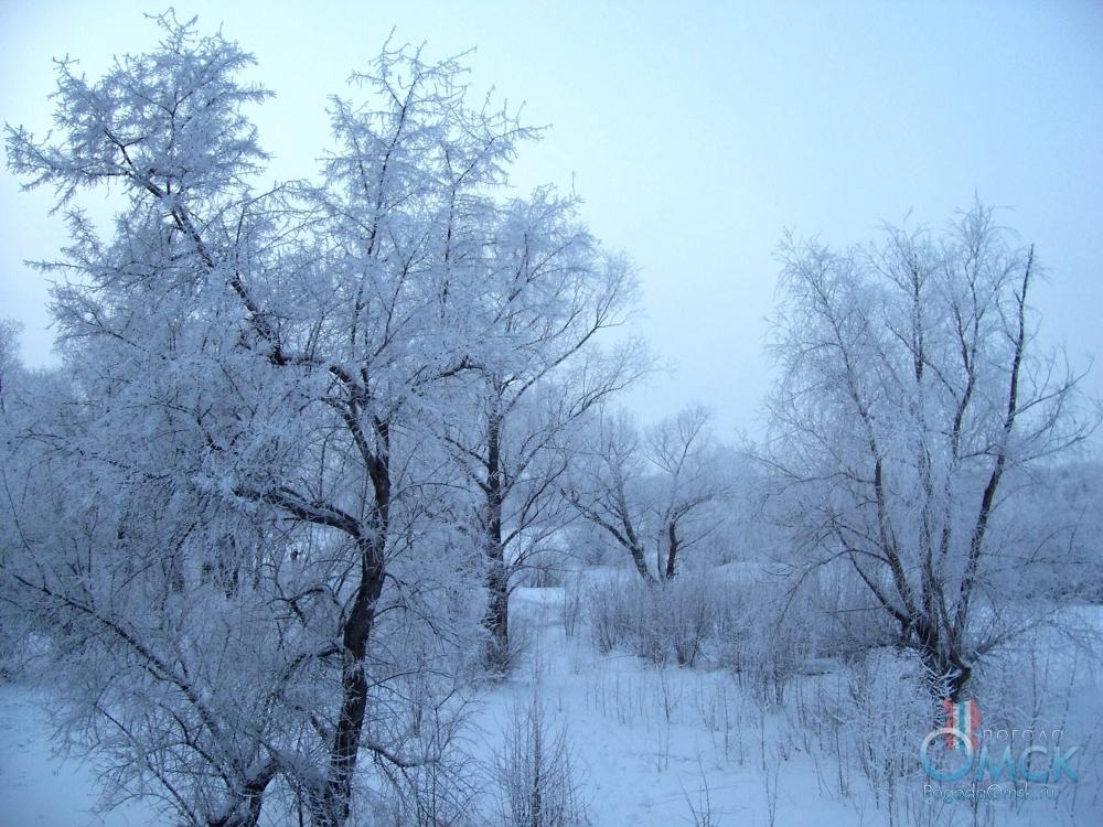 Изморозь на кроне деревьев