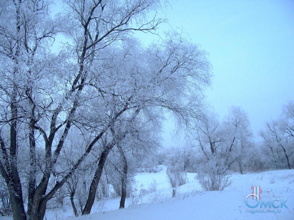 Деревья, опушённые изморозью