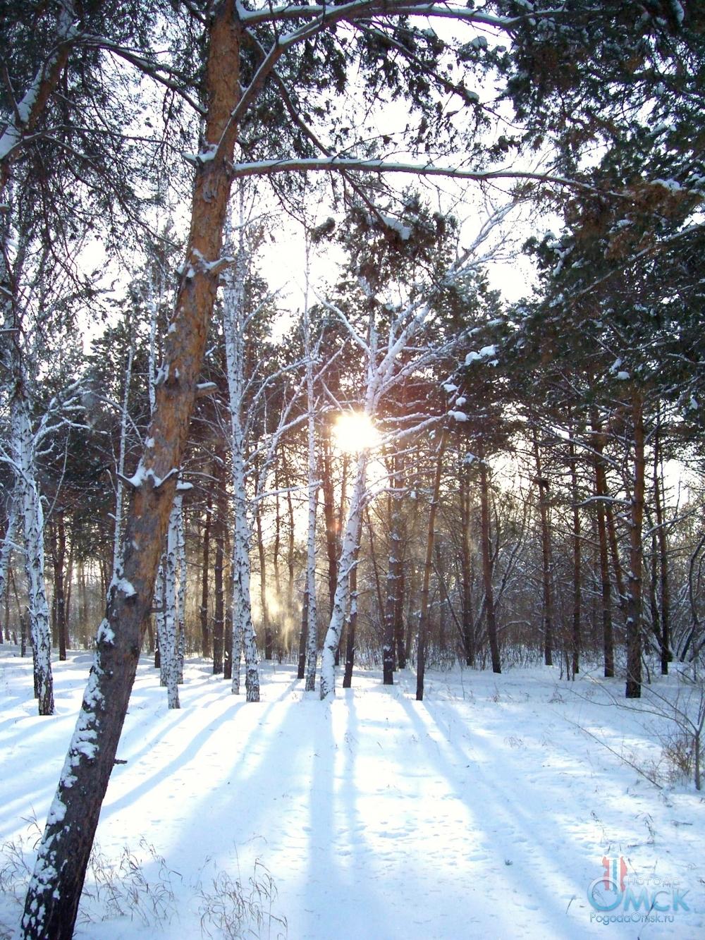 Ветер сдувает снег с деревьев
