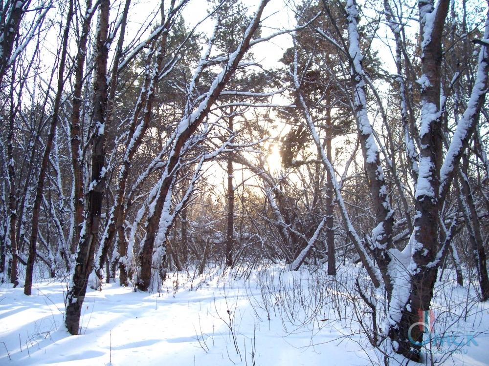 Сырой снег прилип к деревьям