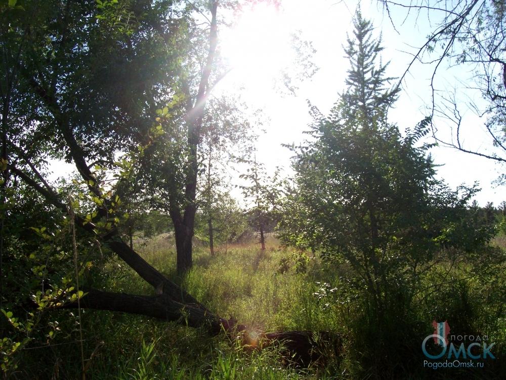 На освещенной солнцем лесной опушке