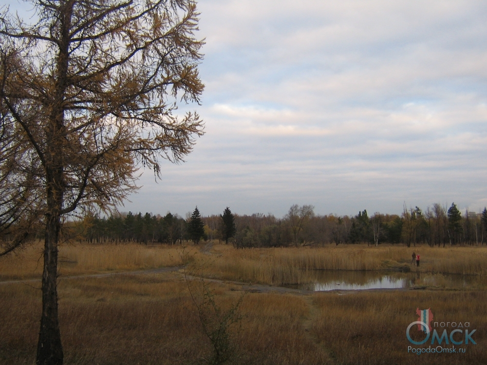 Листья желтеют и опадают, природа готовится к зиме