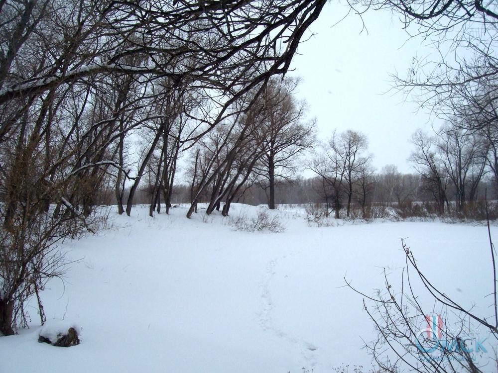 Белизна снега резко оттеняет черноту стволов ивы