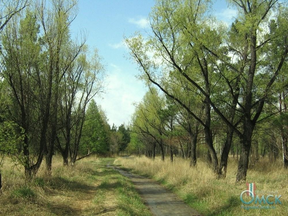 Деревья покрываются листвой