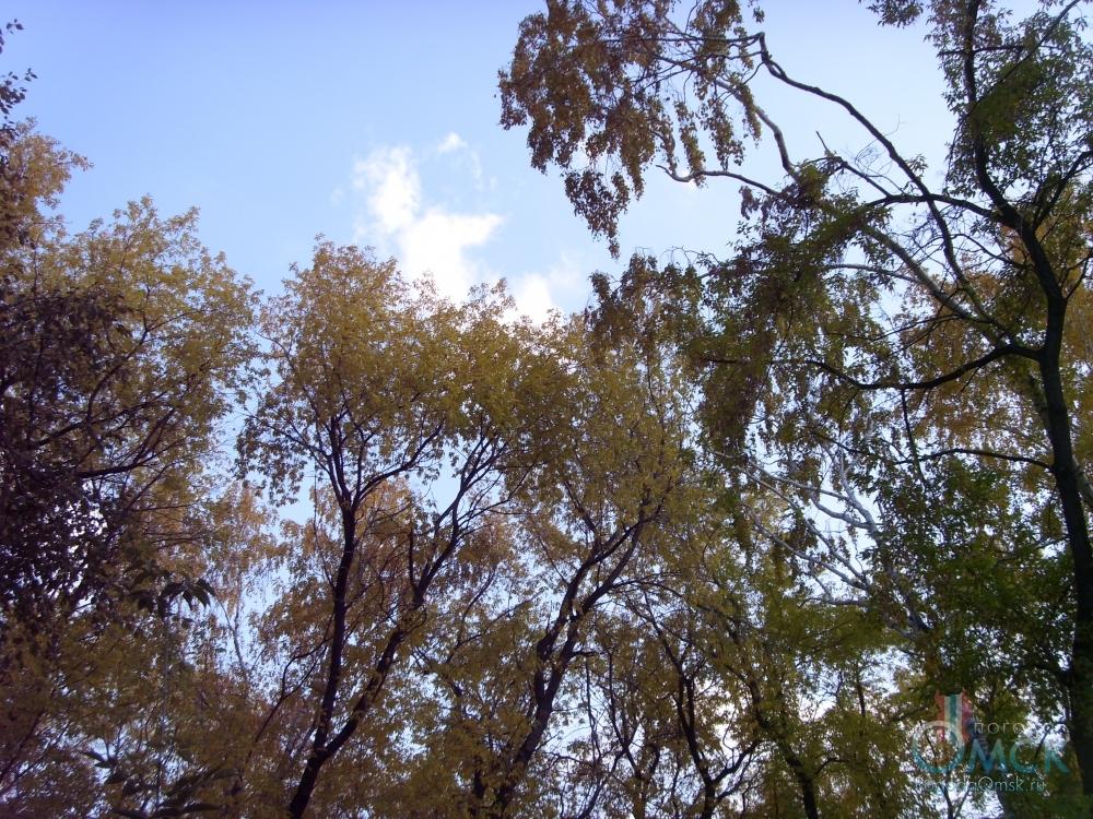 Последние теплые осенние дни, природа готовится ко сну, впереди холодная осень и длинная зима