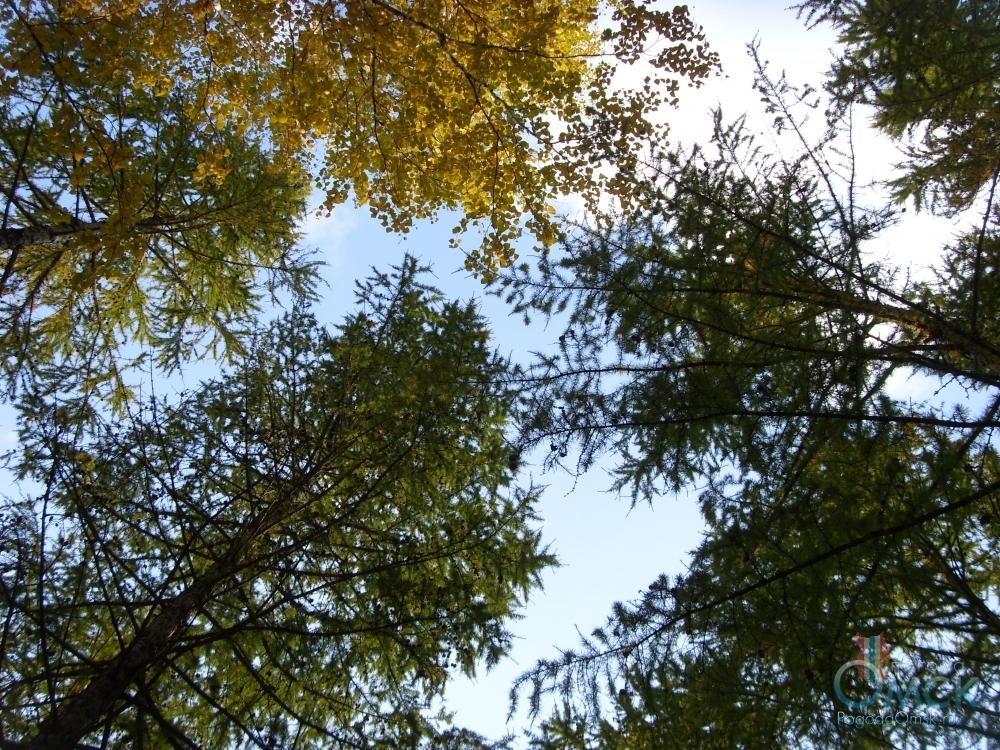 Погожий сентябрьский день