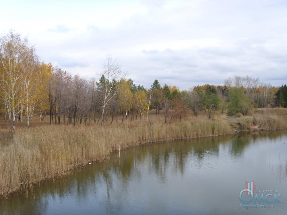 Тростник у озера отцветает и начинает засыхать