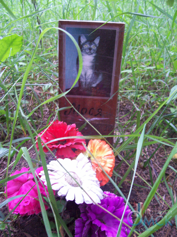 Могилка кошки Моси