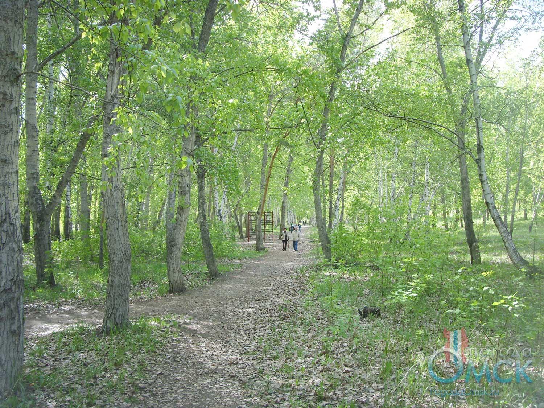 Древесные насаждения в парке